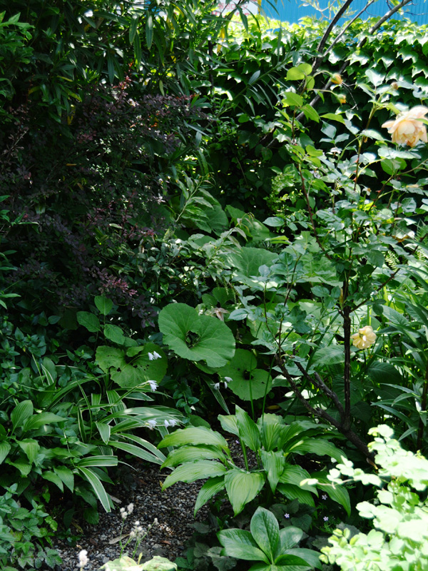 2014春 関西行脚 その1 ついに! 念願の蚊園訪問 ^^_f0191870_21593486.jpg