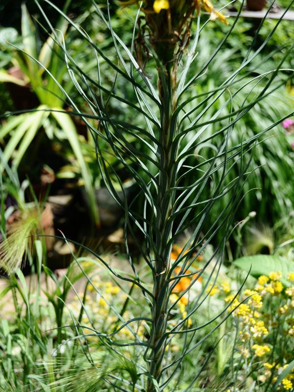 2014春 関西行脚 その1 ついに! 念願の蚊園訪問 ^^_f0191870_2205457.jpg