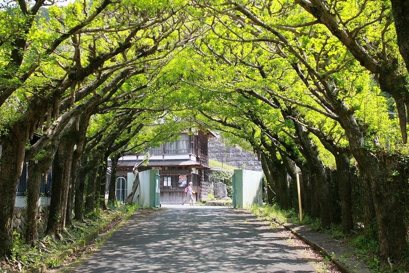 銀杏のアーチ スーク緑の五日間_f0238184_22484469.jpg