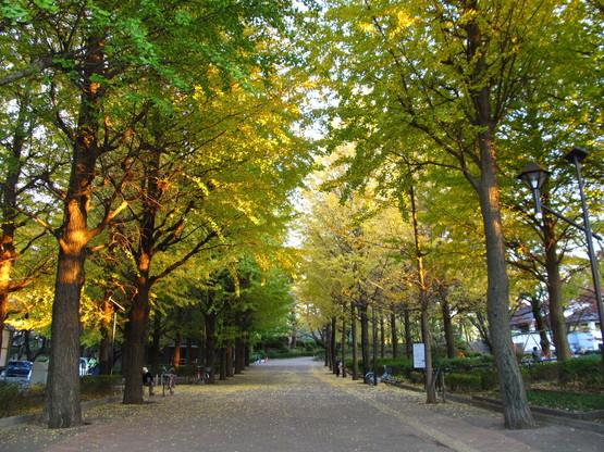 ◇城北中央公園◇_f0322193_925371.jpg