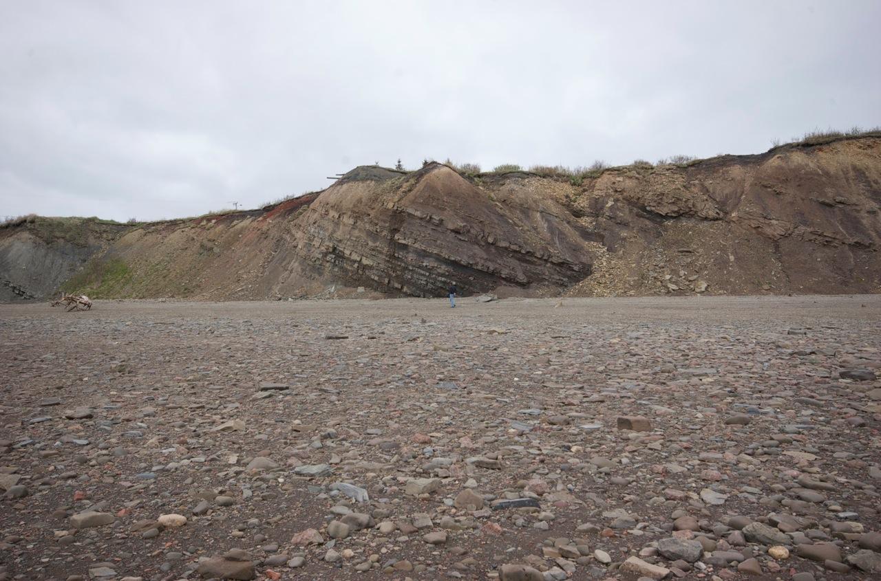 Joggins Fossil Cliffs (<b>ジョギンズ</b>化石岸壁) : ファルマウスミー