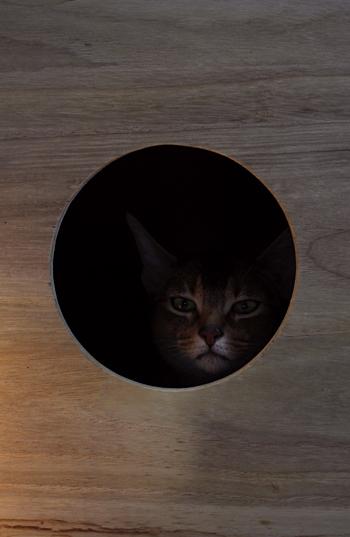 [猫的]桐箱の夜_e0090124_23235385.jpg