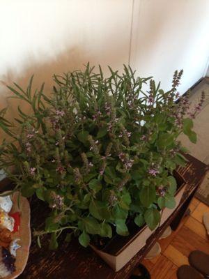 私も大興奮♪ハーブとお花とプロバンスコラボクラス♡_f0095325_1614868.jpg