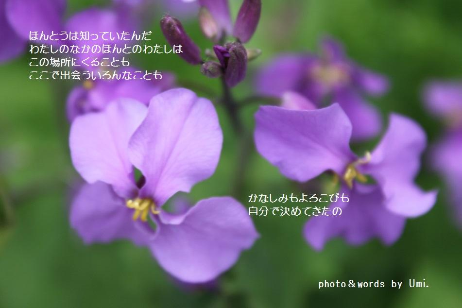 f0351844_10581221.jpg
