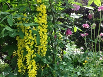 それでも花は咲く_e0326953_14541134.jpg