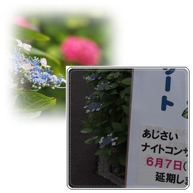 c0042869_6354139.jpg
