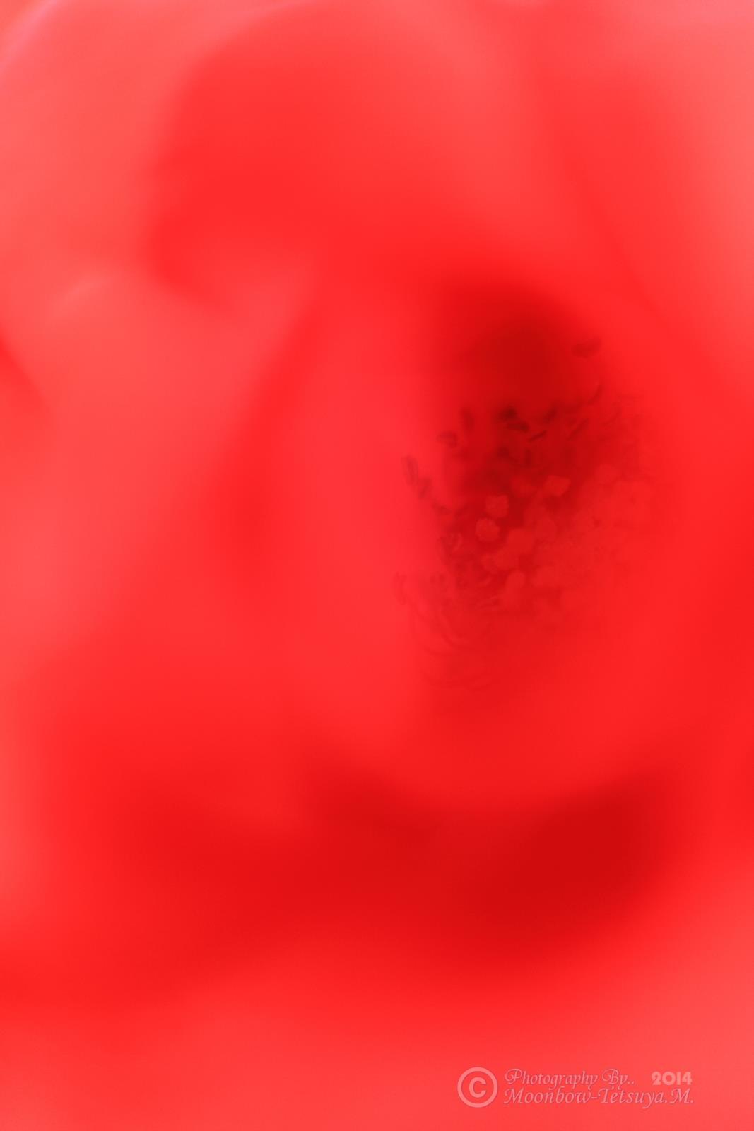 e0197769_05294085.jpg