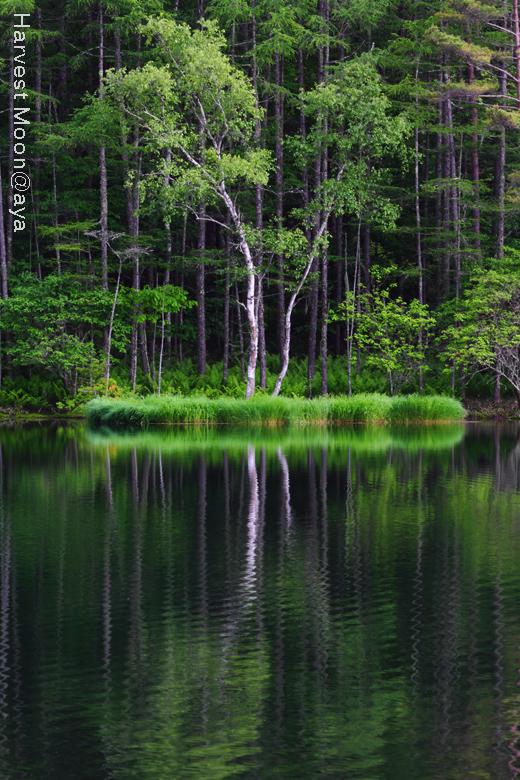 新緑の季節_b0208495_20264378.jpg