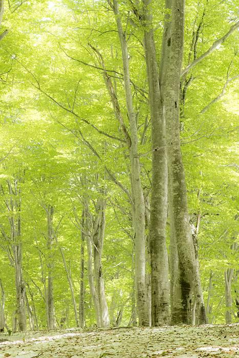 新緑、最終回_c0077395_4205348.jpg