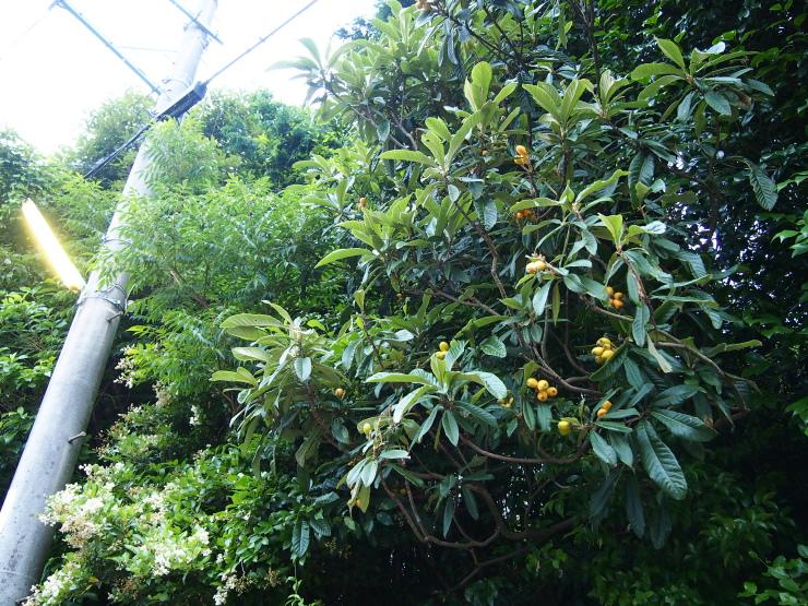 木に成っている気になっている物!_f0249710_23383371.jpg