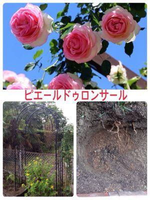 d0039312_2014437.jpg