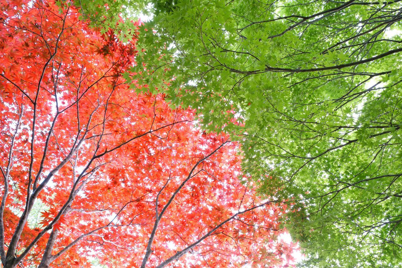 緑 VS 紅_c0220824_1023288.jpg