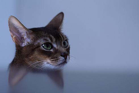 [猫的]マンボウ_e0090124_20224491.jpg