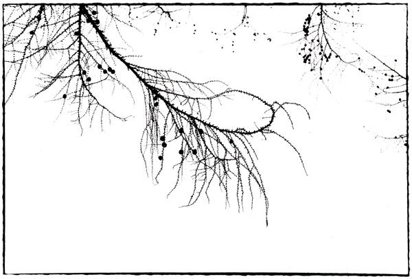 f0182924_1956364.jpg
