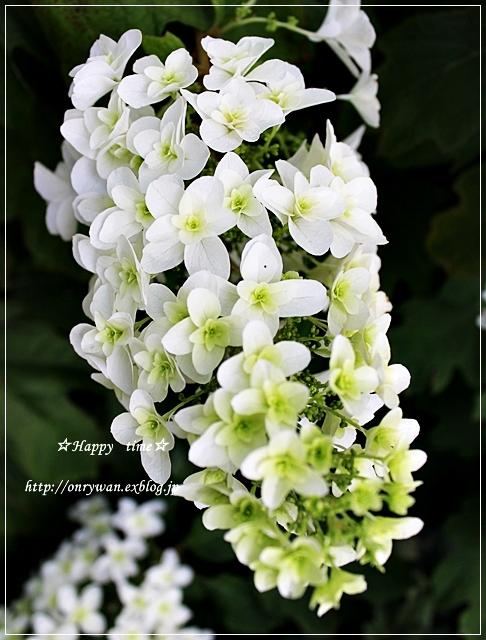おにぎり&焼きそば弁当と紫陽花♪_f0348032_18341802.jpg