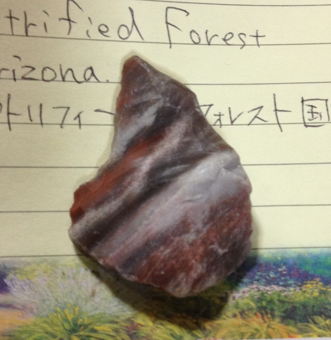 木の化石_a0258233_21483923.jpg