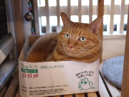 たまごこ箱猫 しぇる編。_a0143140_011444.jpg