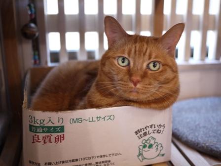 たまごこ箱猫 しぇる編。_a0143140_035627.jpg