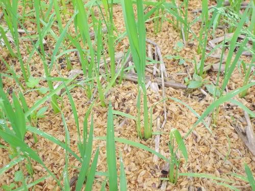 今年の田植えは来週末から始めます!_c0238355_2316118.jpg