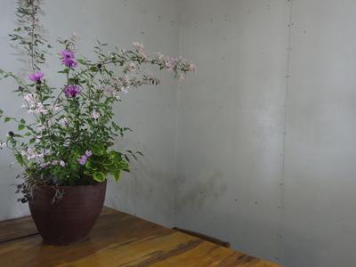 キウイの花        6・6_e0019167_912131.jpg