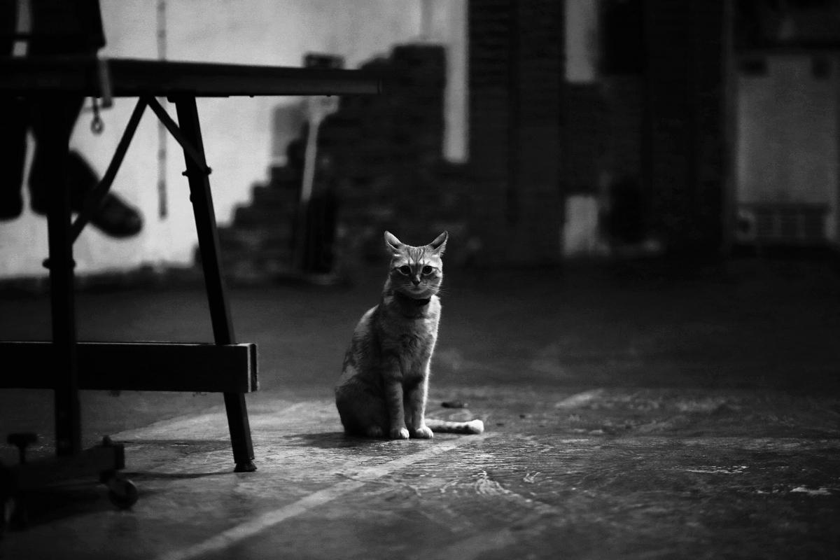 猫にゃん_f0021869_2356441.jpg