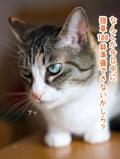 a0119470_134879.jpg