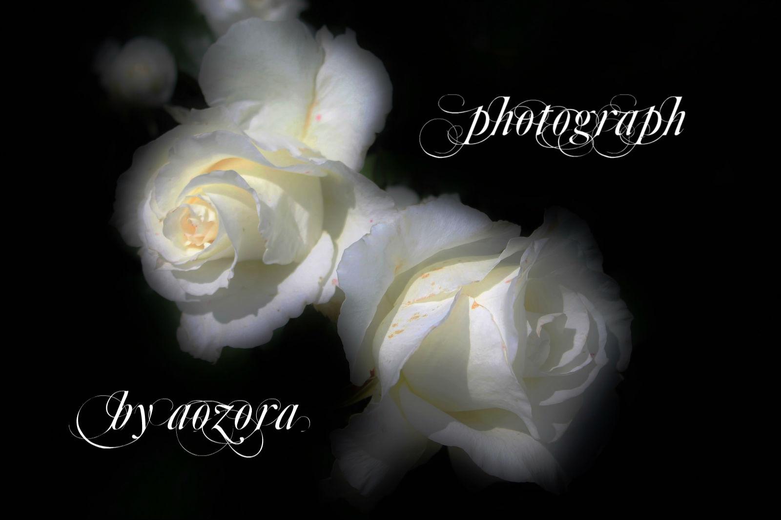 d0199578_835093.jpg