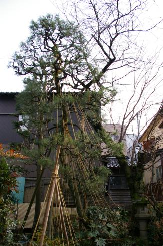 和の庭の家_f0348078_14091874.jpg