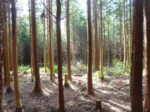 【5名様限定企画】「木づかいワークショップ第二弾♪ ~木のカトラリーを2種類選んで作りましょう~」 _e0263590_14183383.jpg