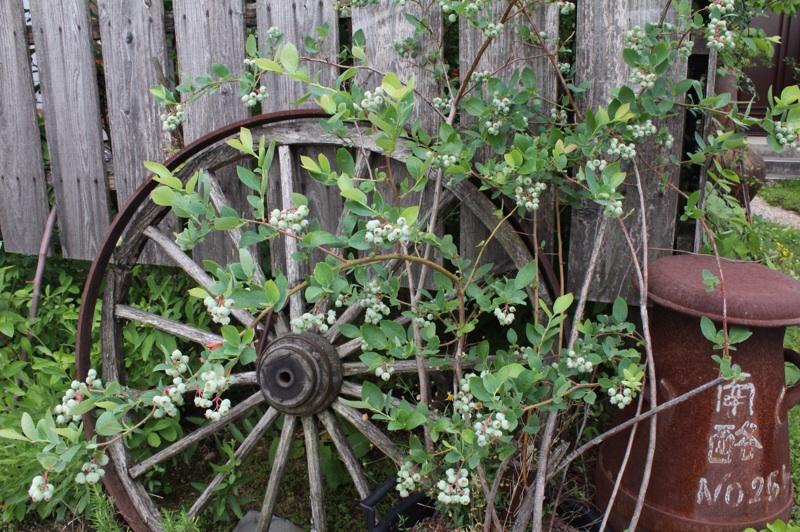 今日の庭_b0132338_09223392.jpg