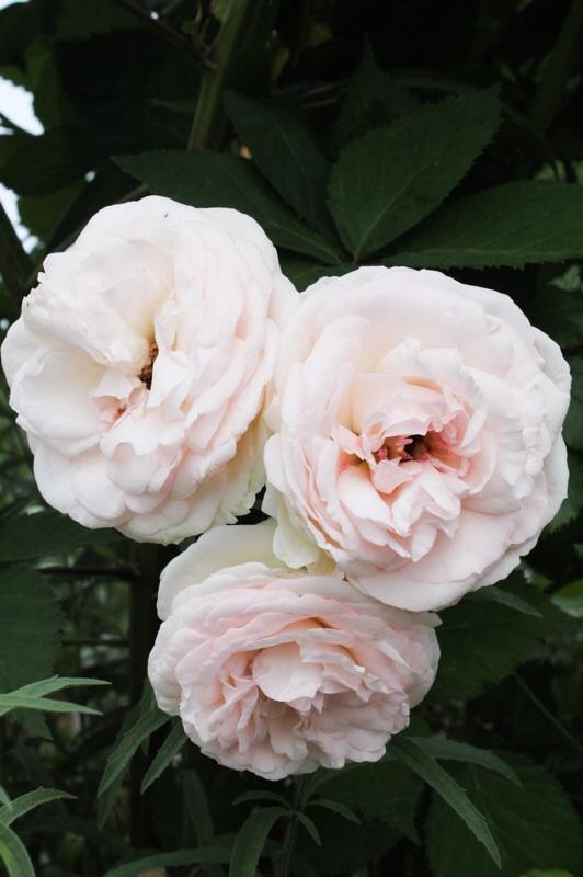 今日の庭_b0132338_09225257.jpg