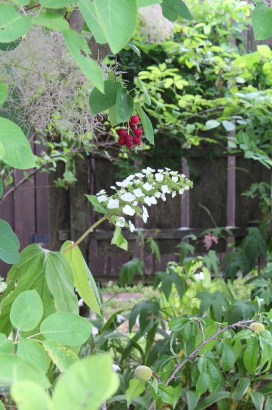 今日の庭_b0132338_09231097.jpg