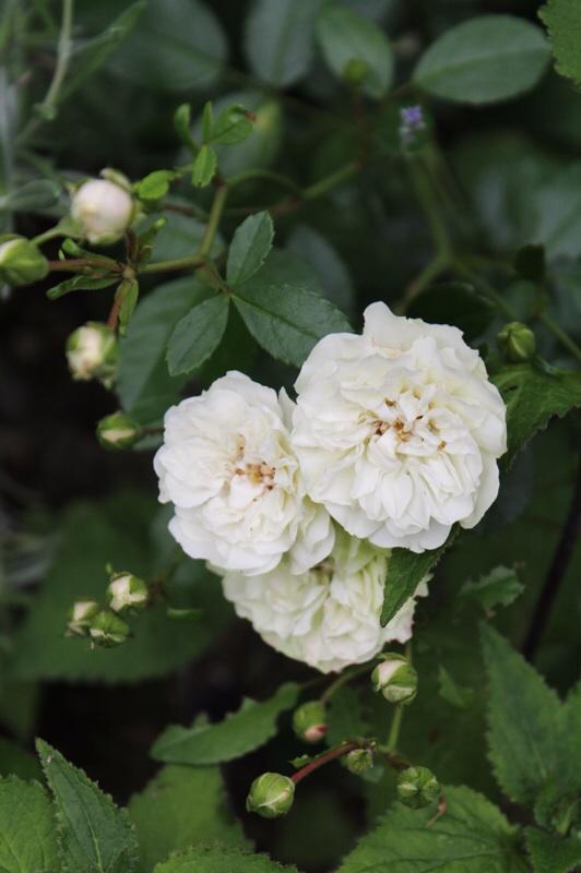 今日の庭_b0132338_09234906.jpg