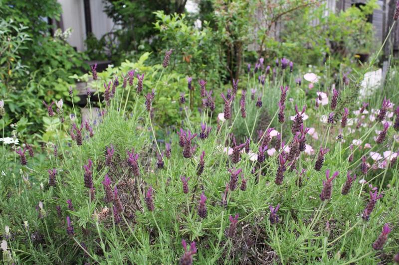 今日の庭_b0132338_09241002.jpg