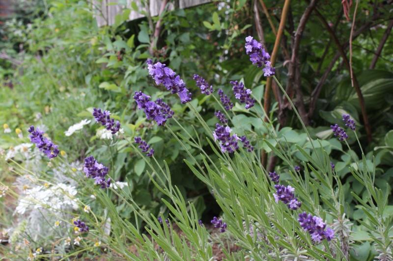 今日の庭_b0132338_09244071.jpg