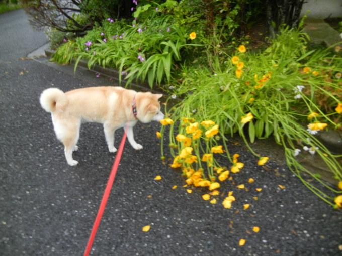 '14,6,7(土)大雨の中、ビジョビジョ散歩隊!_f0060461_7232093.jpg
