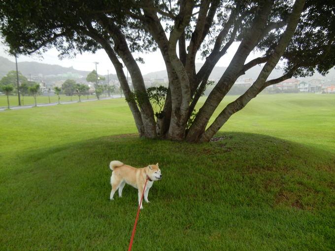 '14,6,7(土)大雨の中、ビジョビジョ散歩隊!_f0060461_7253743.jpg