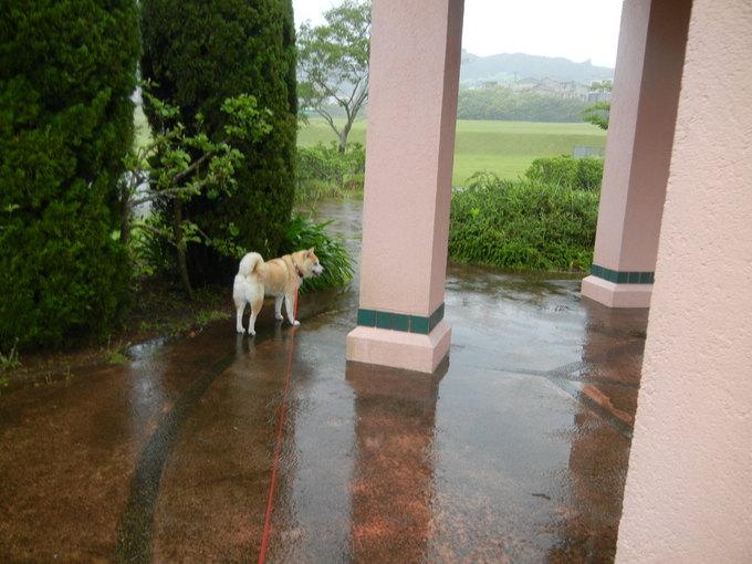 '14,6,7(土)大雨の中、ビジョビジョ散歩隊!_f0060461_7273524.jpg