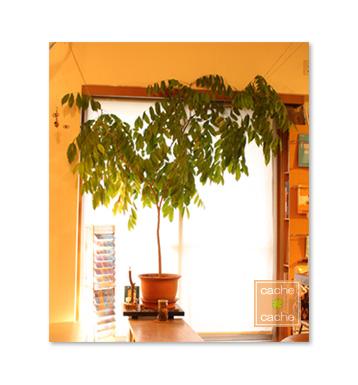 ジャックと豆の木、初剪定。_e0161063_17553265.jpg