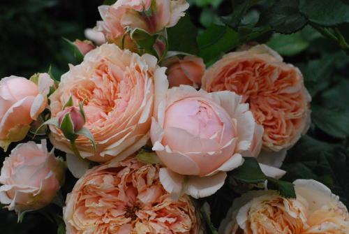 おでかけ② バラを観に。_d0091671_920536.jpg