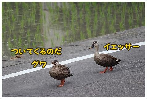 b0111376_14291278.jpg