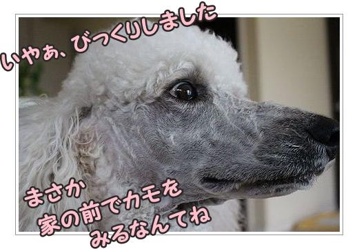 b0111376_14364648.jpg