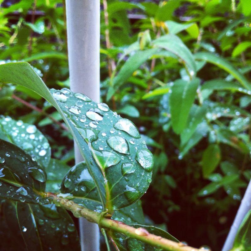 梅雨入り_b0134285_12254929.jpg