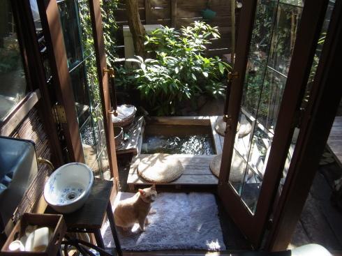 庭の足湯_f0340936_15300705.jpg
