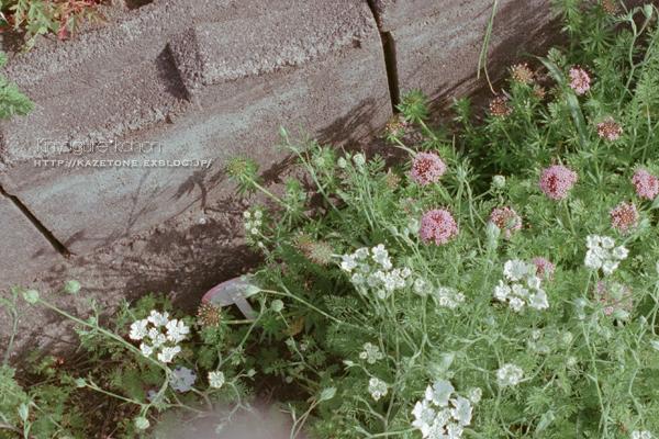 お庭めぐり①**メルヘンな三村庭_b0197639_22474977.jpg