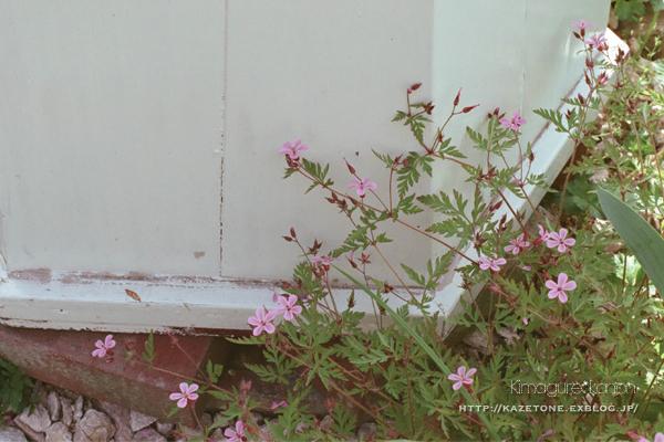 お庭めぐり①**メルヘンな三村庭_b0197639_22542048.jpg