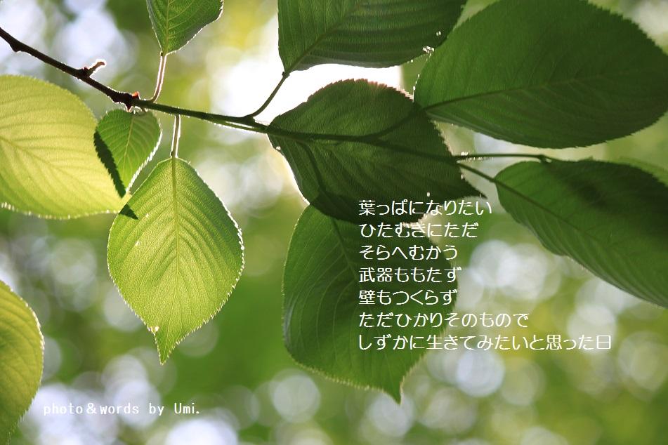 f0351844_09263979.jpg