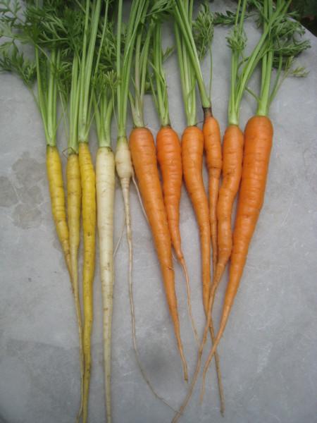 増えてきた収穫物を喰らう。_e0121558_22312545.jpg