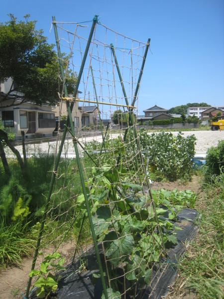 増えてきた収穫物を喰らう。_e0121558_22314512.jpg