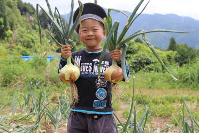 たまねぎ収穫_b0141264_1921263.jpg